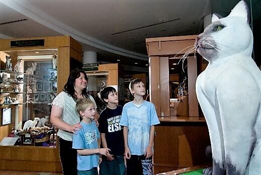 CAT MUSEUM-turrehberin