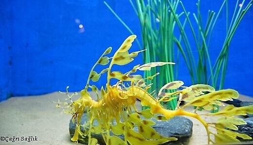underwaterworldlangkawi-turrehberin