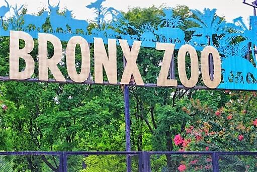 Bronx_Zoo-turrehberin