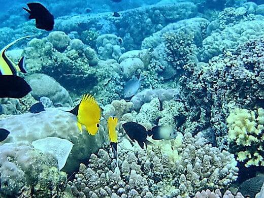 Bunaken_Marine_Park-turrehberin