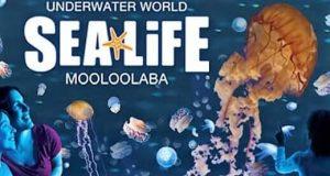 Sea World Brisbane
