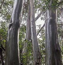 Photo of Wet Tropics of Queensland