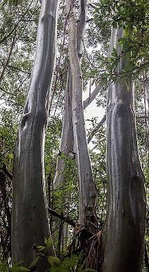 wettropics-turrehberin