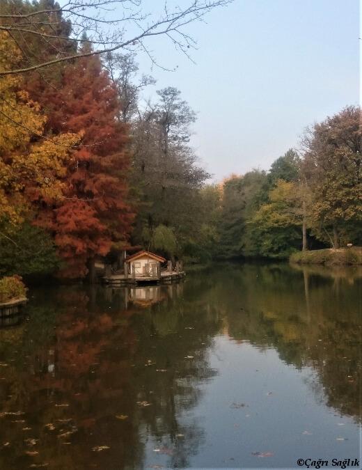 Atatürk Arboretumu- turrehberin